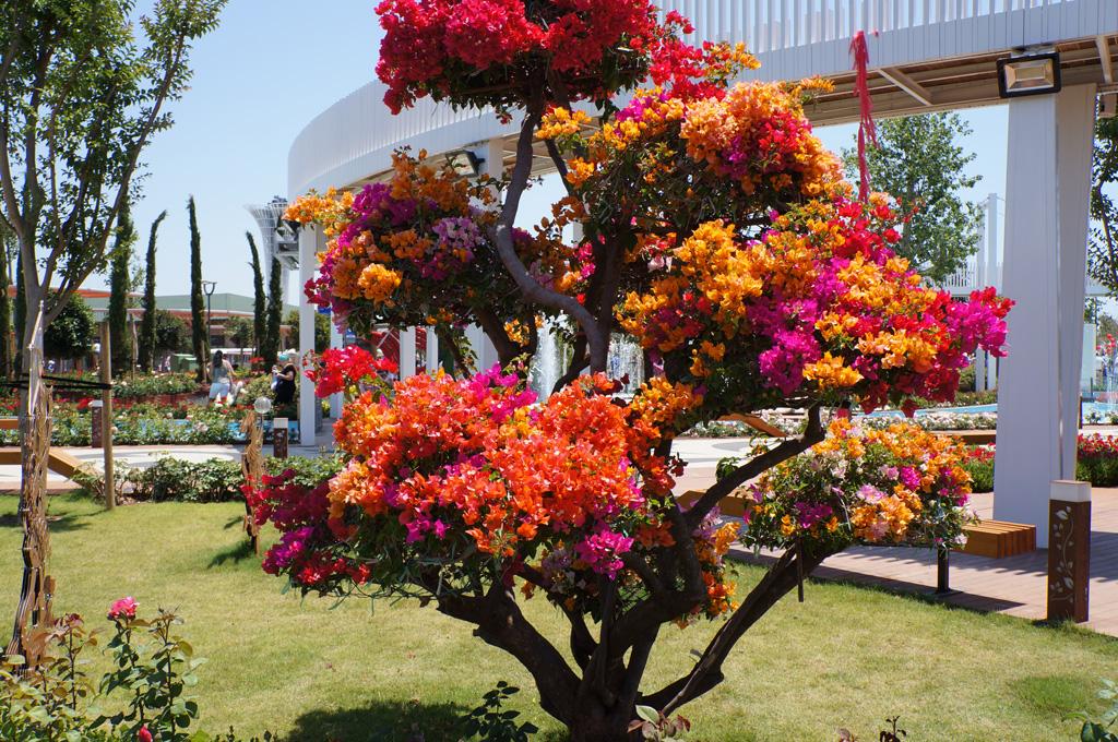 Это живое дерево с разноцветными цветами!